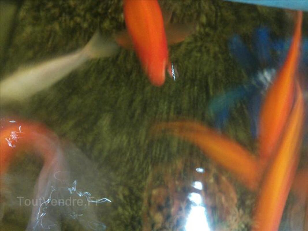 Aquarium et poisson